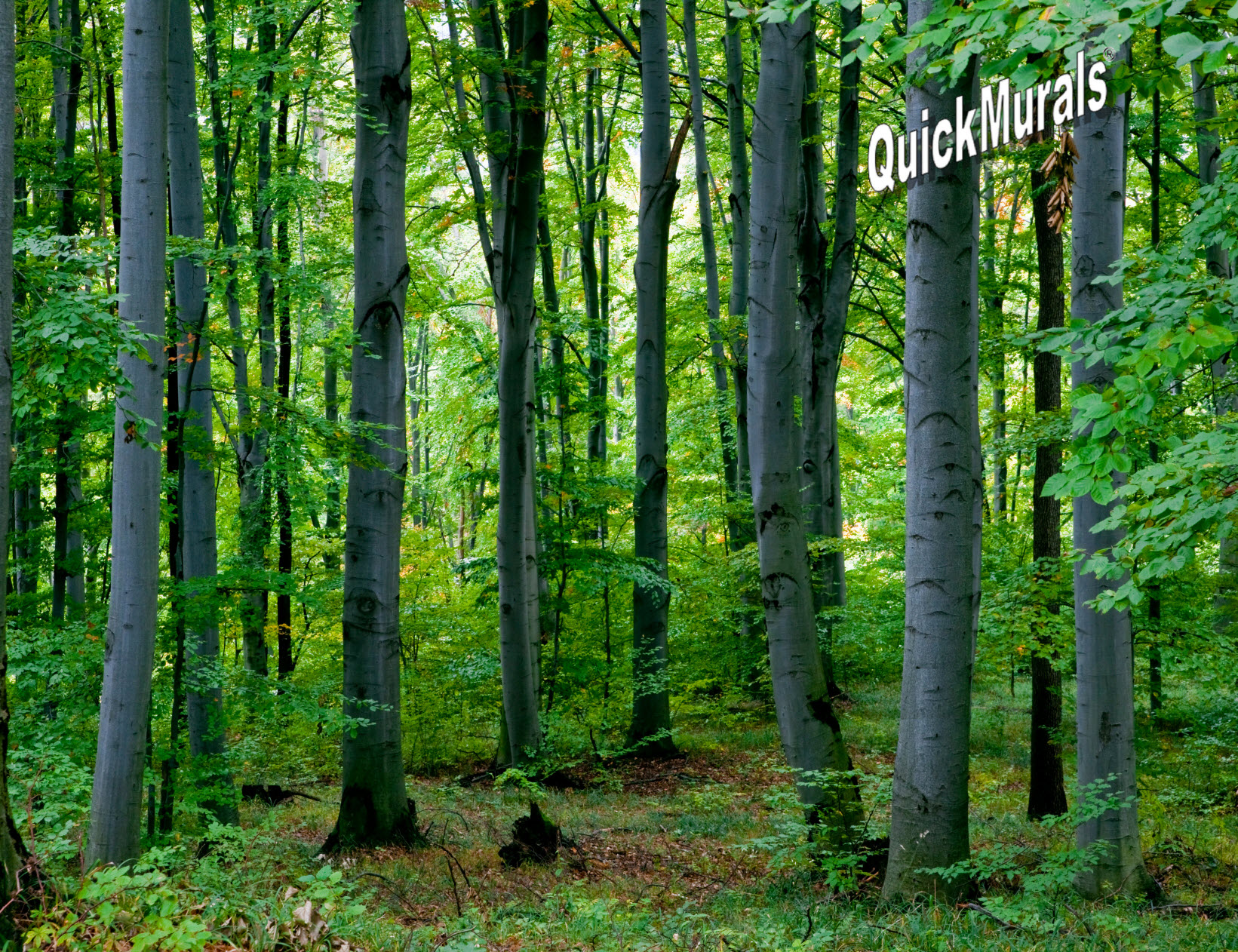 Forest Wall Murals Woodland Forest Peel And Stick Wall Mural