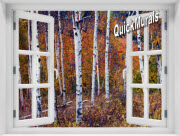 Autumn Birches Window 1-Piece Peel & Stick Mural