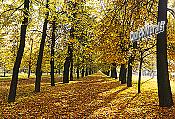 Autumn Park Wall Mural