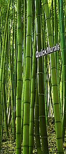 Bamboo Grove 1-Piece Peel & Stick Wall/Door Mural