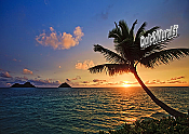 Tahiti Sunset Peel and Stick Wall Mural