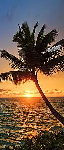 Palm Beach Sunset 1 Piece Peel & Stick Wall/Door Mural